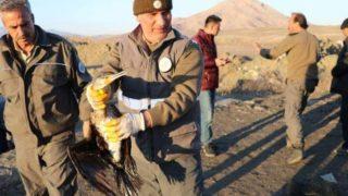 آفاد التركية تنقذ 45 طيرًا مهددًا بالانقراض
