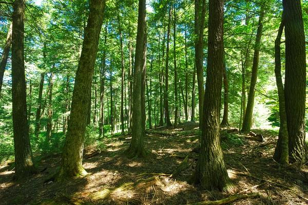 تركيا تعتزم إطلاق حملة تشجير ضخمة في اليوم العالمي للغابات