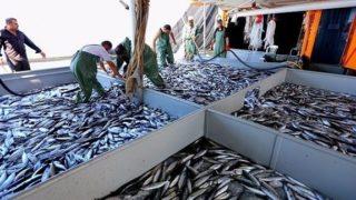 تركيا تجني 17 مليون دولار من صادرات السمك إلى روسيا بـ3 أشهر